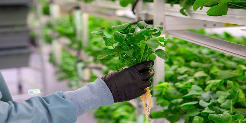 Why Should You Grow Your Fruits & Vegetables with a Hydroponic System?